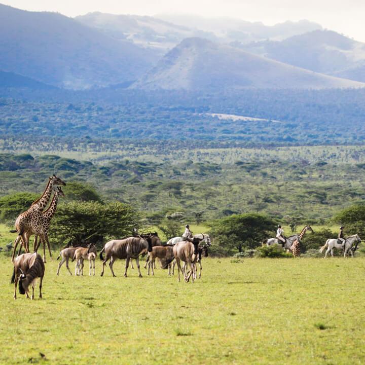 Africa Born Safari Style Luxury Private Camping Activities