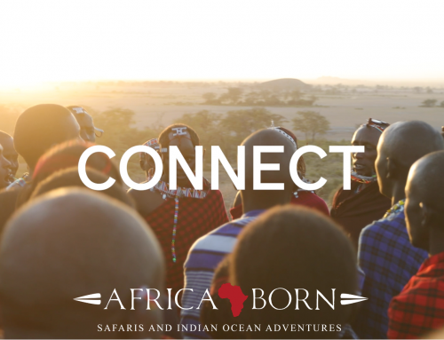 Africa Born – CONNECT