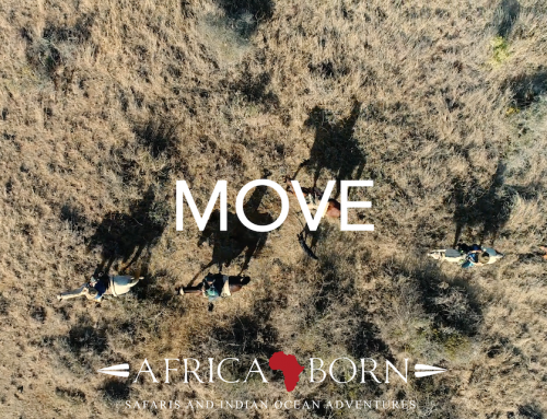 Africa Born – MOVE