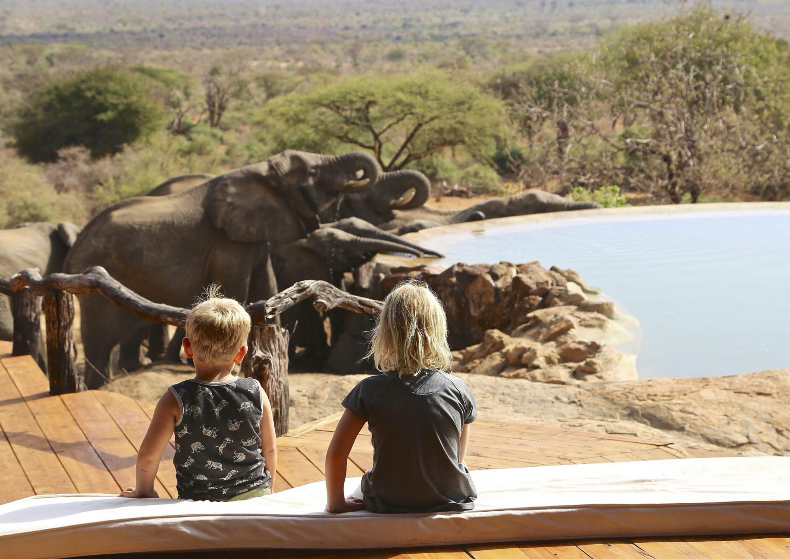 christmas safari